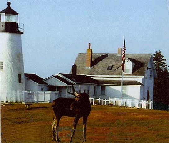 Moose by Pemaquid Lighthouse